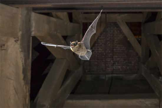 Hang mothballs near nesting sites