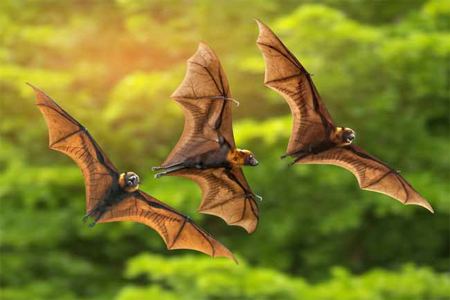 how do I get rid of bats outside my house