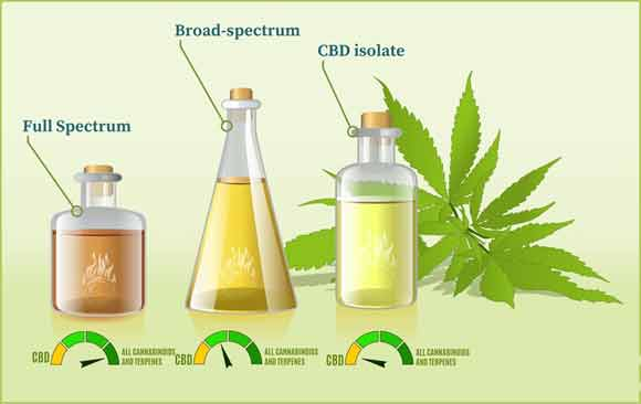 What are the uses of CBD oil