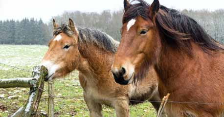 Let Us Know About The Major Categories Of Horse Breeds
