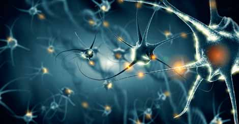 What does the Anatomy of Neurons Consist of