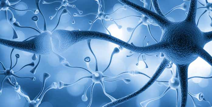 What is the Role of Nerve Cells