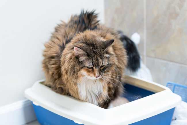 large cat litter box