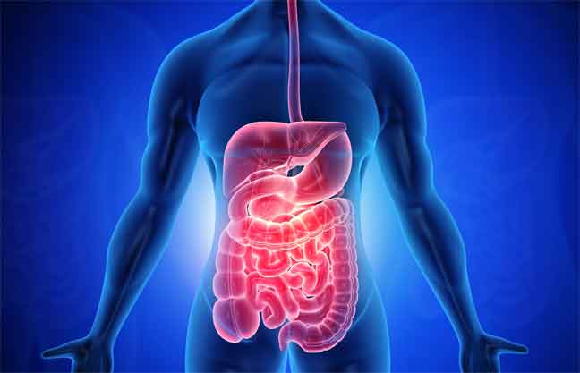 A Little Bit of Basic Info on the Digestive System